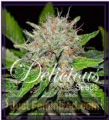 Delicious Deep Mandarine Feminised Cannabis Seeds
